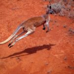 Five Ways To Cross The Red Centre